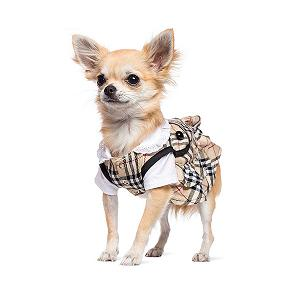 Responsive web design pet adoption 00056 chihuahua